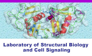 Laboratory of Structural Biology and Cell Signaling