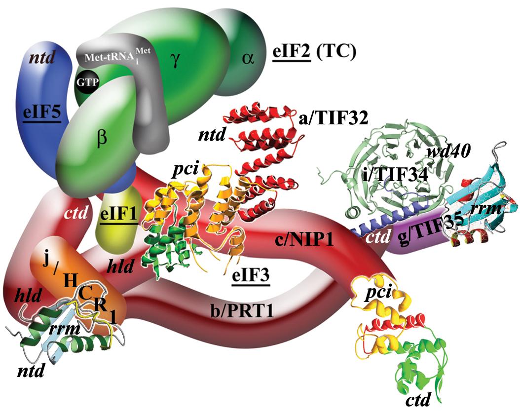 translační iniciační faktory v superkomplexu