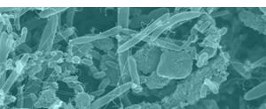 Laboratoř buněčné a molekulární imunologie
